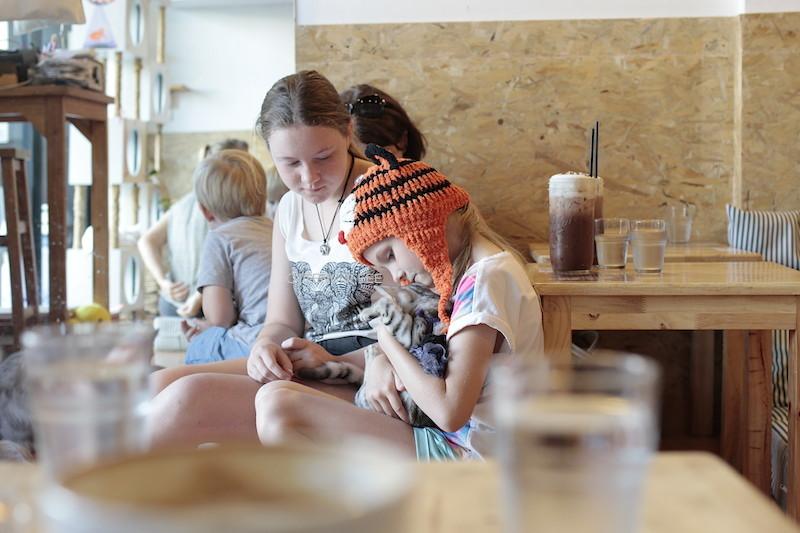 Pengunjung bebas bermain dengan para kucing di kafe ini