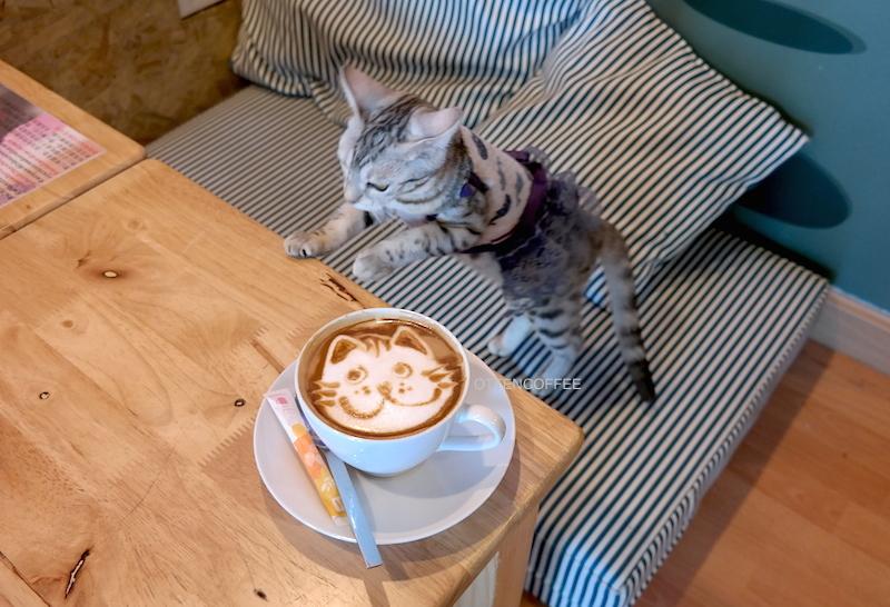 Salah satu kucing yang mencoba nyolong kopi saya. Ha-ha-ha.