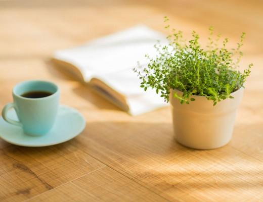 plant-coffee