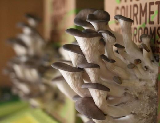mushroom sumber obliqueexposuredotwordpressdotcom