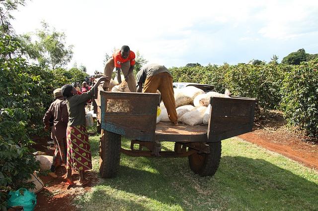 Pergilah lebih sering, terutama ke kebun-kebun kopi. Agar kamu tahu juga ada usaha keras para petani di balik secangkir kopi nikmat yang kamu nikmati.