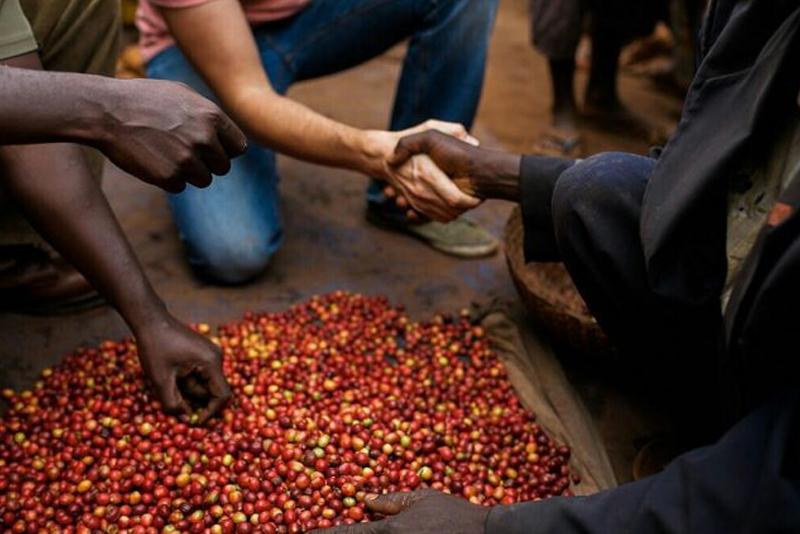 eksportir biji kopi