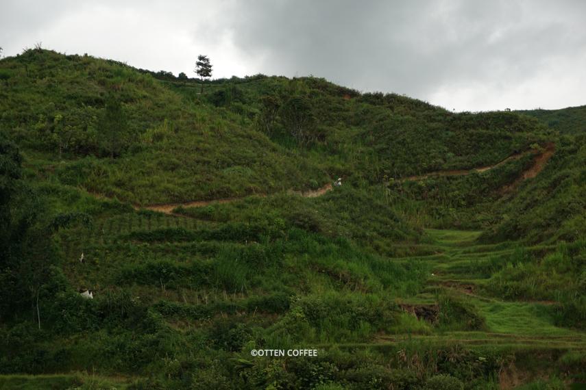 Desa Koto Baru berada di kaki bukit, perkebunan kopinya berada di balik lembah.